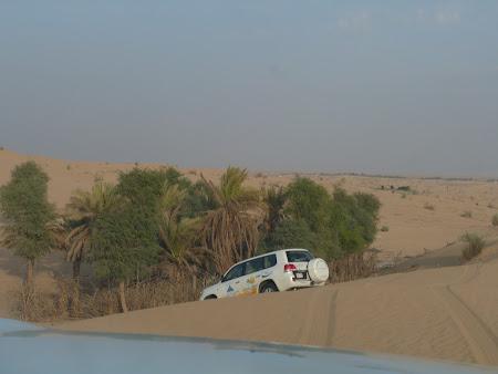 Safari langa o oaza