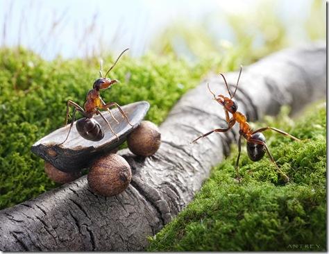 poze_insecte