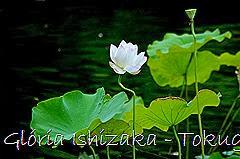 6 -Glória Ishizaka - Tokugawaen - Nagoya - Jp