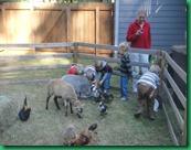 boys feeding goat