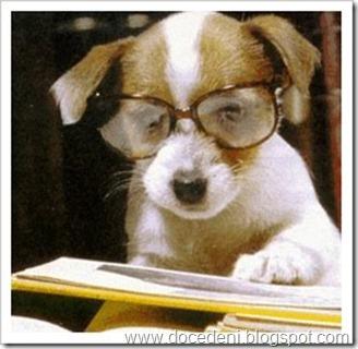 cachorro estuda