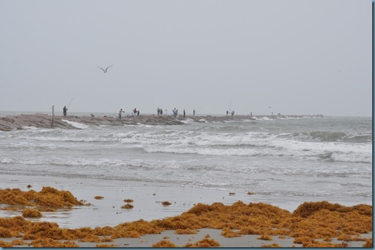 04-17-13 Port Aransas 15