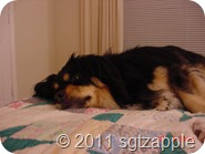 Addie sleeping on quilt