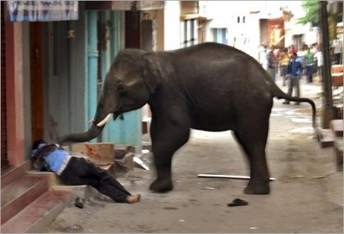 India Elephant Rampage 05