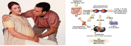 anemia hamil