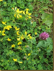 IMG_1176 wildflowers