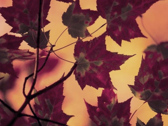 Patterns of Nature screensaver -1