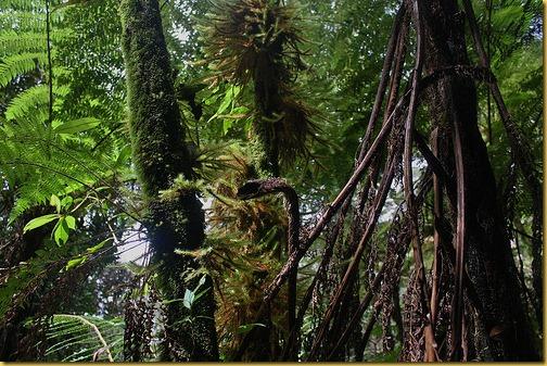 borneo-rainforest