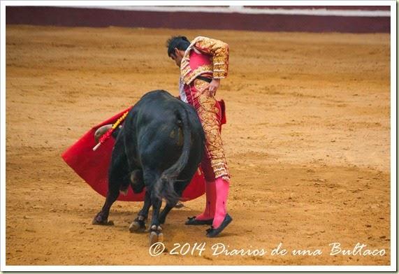 Toros 2014 (1)-50