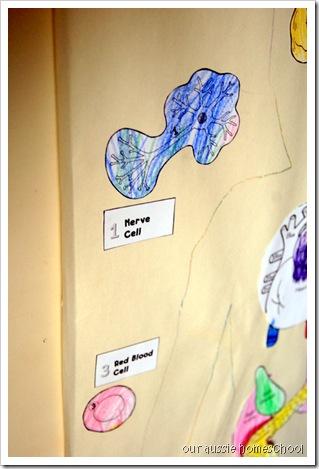 Our Aussie Homeschool ~ Cells