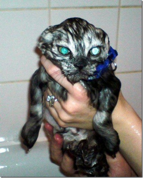 very_wet_very_mad_cat
