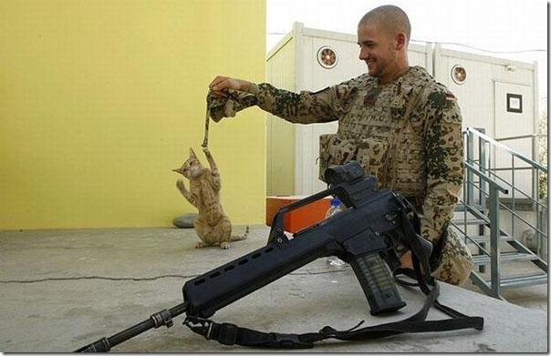 Soldados e animais de estimação (1)