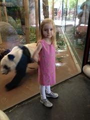 zoo gma- panda