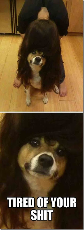 dogs-no-clue-17