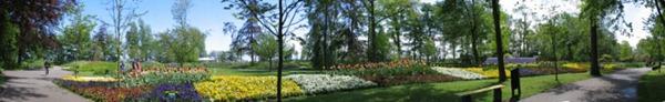 بانورما زهور