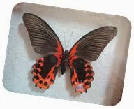 бабочки 123