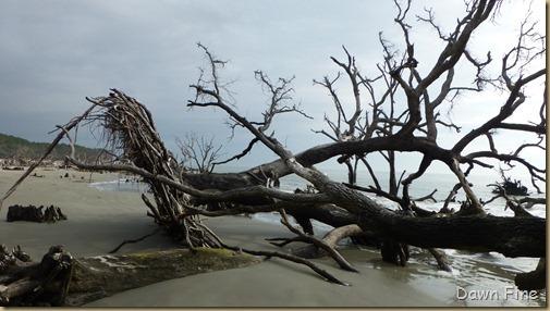 Hunting Island SP_225