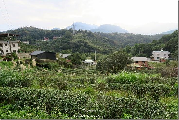 新店 文山農場 (45)