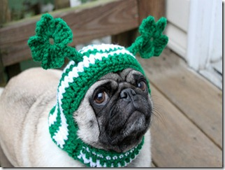 st%20Patricks%20Day%20doggie%20hat