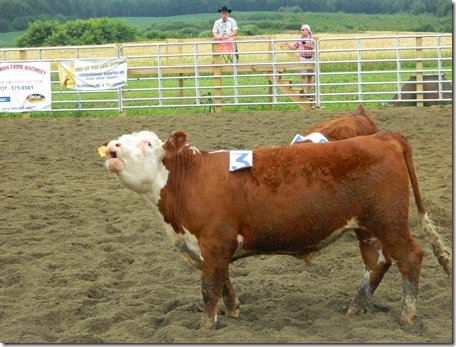 Team Penning 2011 145