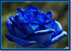 DEEP BLUE ROSE RS2