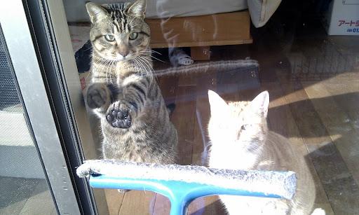 [写真]窓拭き妨害中