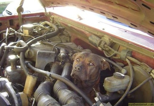 dog-in-engine-bay-power-12729761335