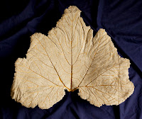 Concrete cast of a zucchini leaf with hand painted gold veins. About 30\