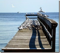 Pier full of seagulls