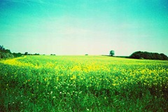 Summer-Fields-9---XPRO