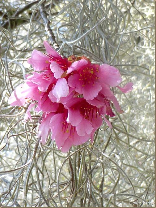 Magnolia Plantation_074