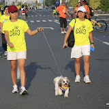 Pet Express Doggie Run 2012 Philippines. Jpg (222).JPG