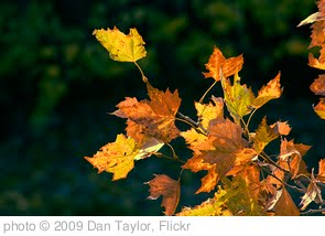 'Autumn Leaves' photo (c) 2009, Dan Taylor - license: http://creativecommons.org/licenses/by-nd/2.0/
