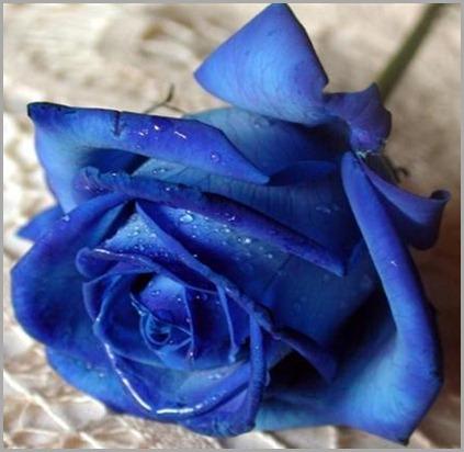 rosa-azul