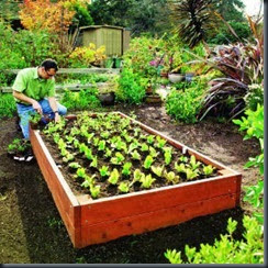 raised-bed-main-m