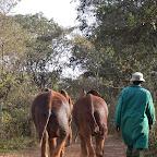 Nach Hause, Sheldrick Wildlife Trust © Foto: Susanne Schlesinger | Outback Africa Erlebnisreisen