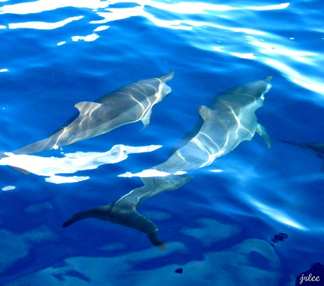 dolphins in bais