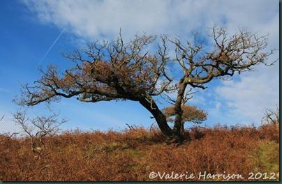 28-tree