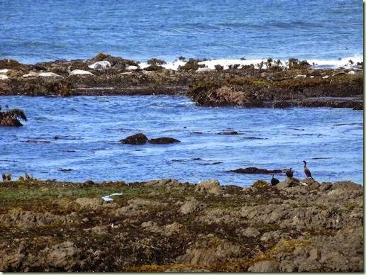 Seals and cormorants