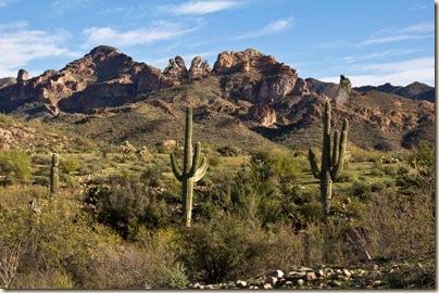 ariz desert spring