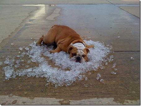 Dog In Ice