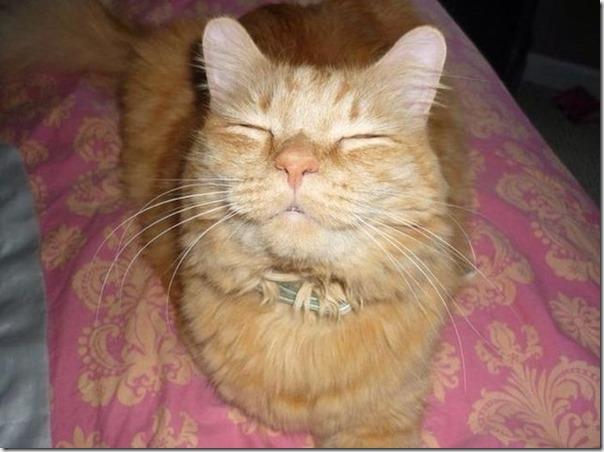 Gatos Felizes (19)