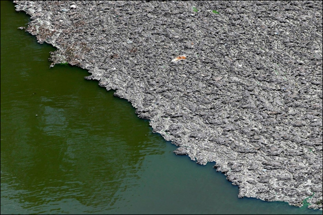 Trash floats on top of the polluted water in Billings reservoir, the largest reservoir in São Paulo, Brazil, which, despite its filth, supplies 1.6 million people with water. The state government wants to make the water adequate for human consumption, adding to the complexity of securing safe water supply during the drought. Photo: Paulo Whitaker / Reuters