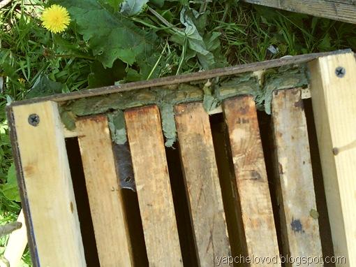 Гнёзда пчел-листорезов из берёзовых листьев