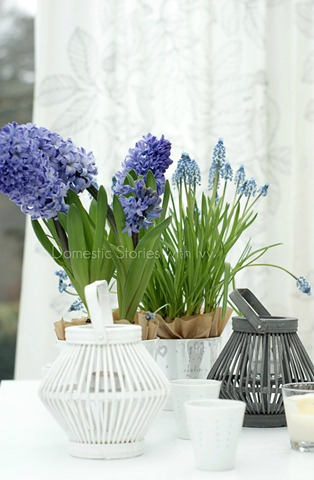 bulbs_&_muscari_~_ii