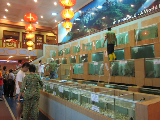 An impressive collection of live tanks at one of KK's seafood restaurants.