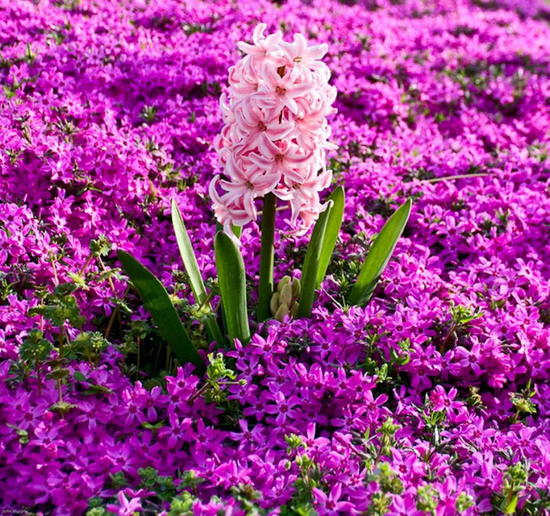 Beautiful Flowers: Wish I can touch them