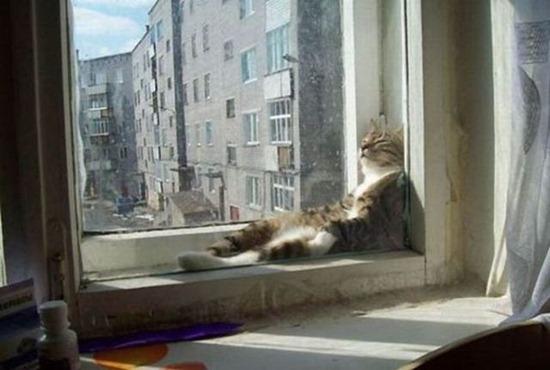 gatos durmiendo (7)