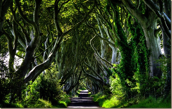 The-dark-hedges-001.bmp