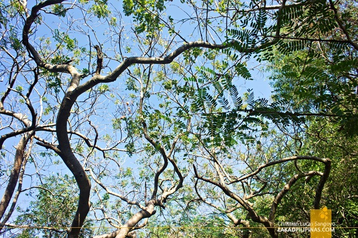 Trees Growing Above Bolinao's Wonderful Cave
